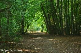Waldweg - 4349