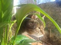 Katze Heide