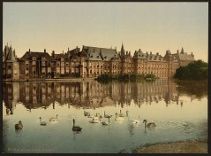 Haag - Wyver