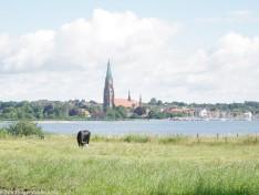Dom zu Schleswig - 3552