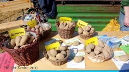 Kartoffeln - Alte Sorten