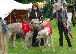 Irish Wolfhounds IV