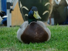 Big Duck II