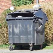 Müll-Möwen - 6799
