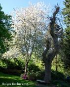 Botanischer Garten Kiel - 1177