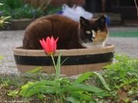 Nachbars Katze - 6845