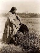 Indianerin-Samenernte