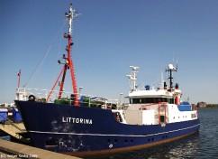 Littorina II