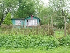 Kleingärten Langsee - 9631