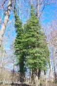 Waldspaziergang - 6831
