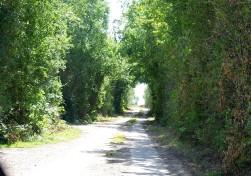 Feldweg - M1863