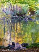 Baumspiegelung - 2006