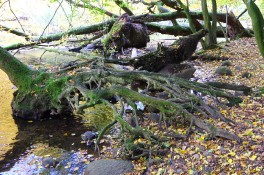 Baumstumpf - 2004