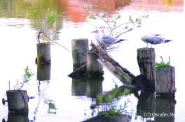 Möwen am Kirchsee