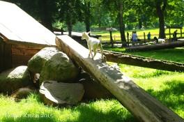 Raisdorf Wildpark - 6566